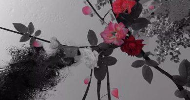 艺术家杨文萍,用镜头捕捉生命中的破碎与虚无