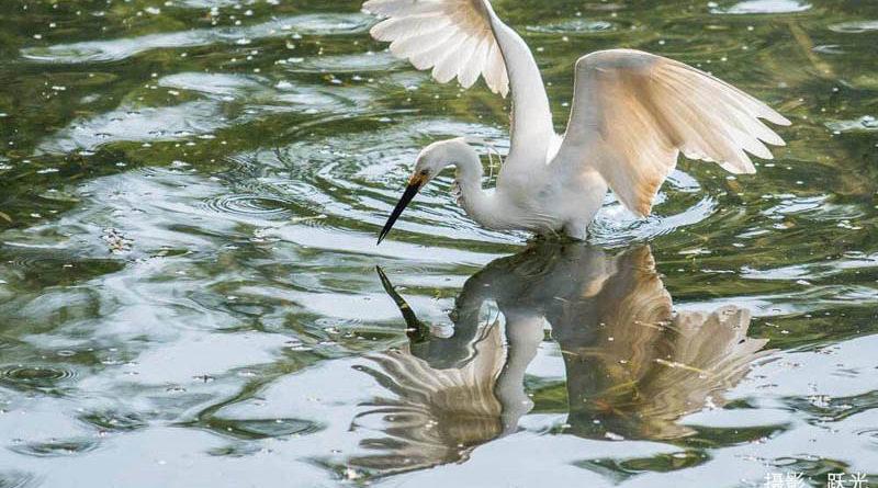 摄影:翠湖拾趣