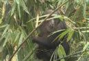视频:云南屏边 野生短尾猴出没 村民美食招待