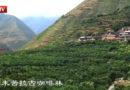 中国咖啡第一村,云南朱苦拉