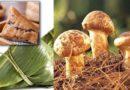 云南野生菌粽  惊艳你的味蕾